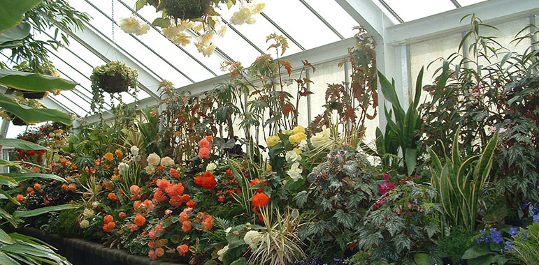 Plants in Begonia House.