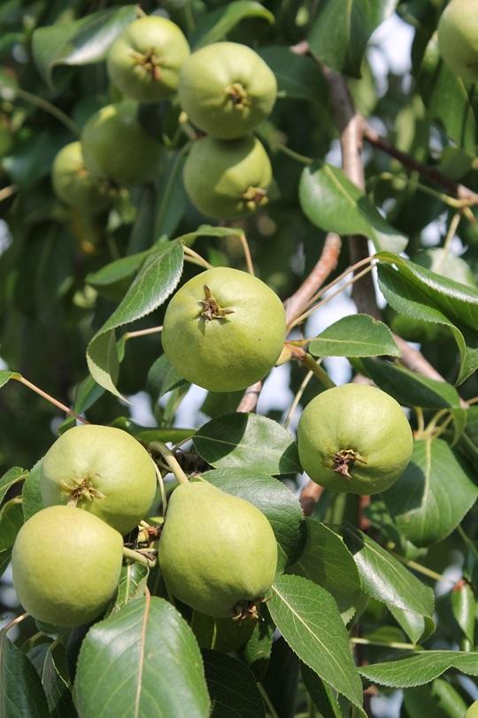 Sustainability Growing Fruit Trees Wellington City Council