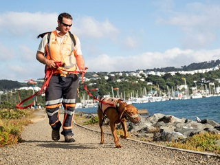 Photo is looking back along Cobham Drive towards the Evans Bay Marina. In the foreground there is a dog handler with a penguin detection dog on a lead. Both are wearing high viz and the dog is muzzled to be on the safe side. They are walking on a path next to the sea. In the distance you can see yachts in the marina, and houses on the hillside.