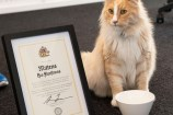 Mittens the cat posing with a certificate and miniature key to the city.