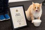 Mittens the cat drinking water from a bowl next to his Key to the City certificate.