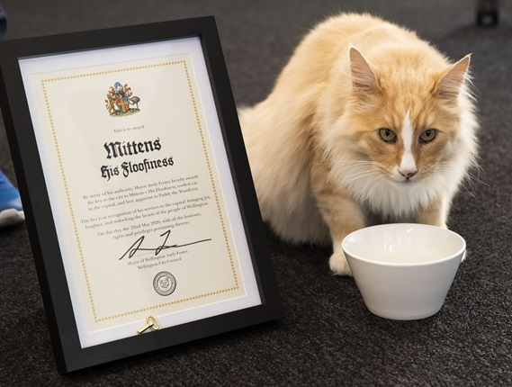 Image of Mittens with certificate and key to the city