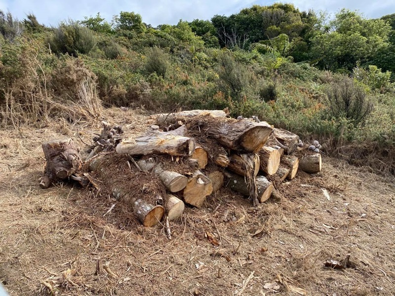A large pile of logs which has been constructed to be a habitat for lizards, on a hillside with thick bush in background.