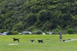 A person and few dogs off lead at Waihinahina Park dog exercise area.