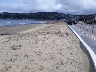 Lyall Bay sand dunes planted