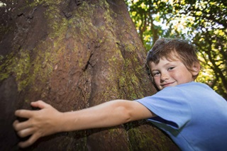 Boy hugging an enormous tree.